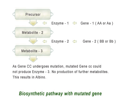 Biosynthetic-pathway-with-mutated-gene